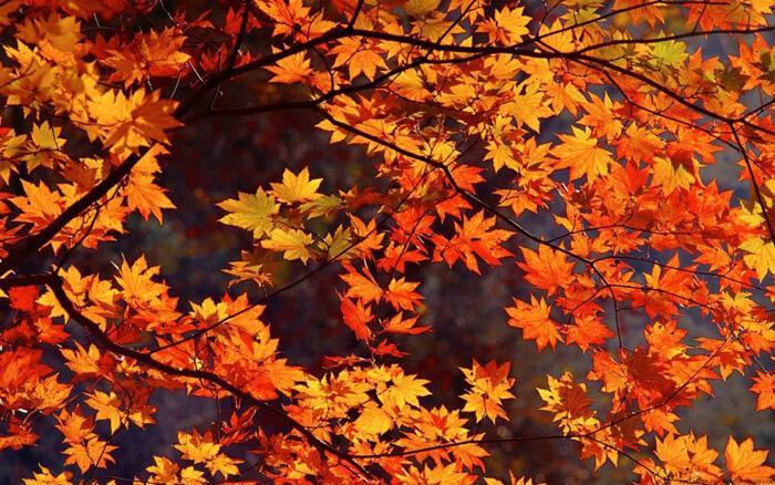 25 Fantastičnih Pozadina Za Jesenje Dane Sn